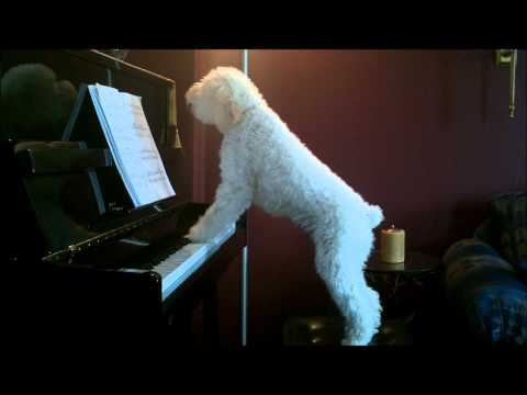 Klaverhunden
