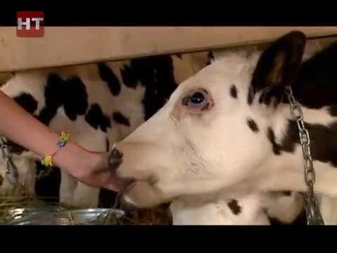 В Новгородской области в области действует 430 крестьянских фермерских хозяйств