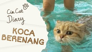 Video Cia Cat Diary - Ep 31 - Koca Berenang MP3, 3GP, MP4, WEBM, AVI, FLV Januari 2019