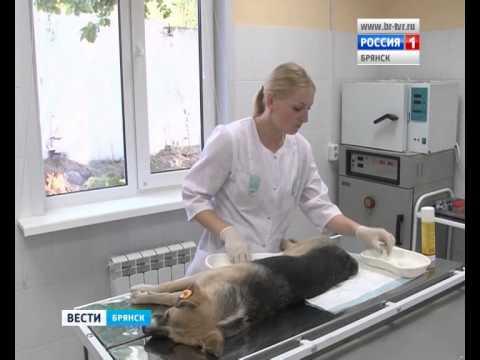 Снижение агрессии безнадзорных собак в ответ на ОСВВ, г. Брянск