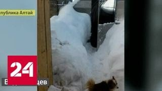 На Алтай обрушился мощный снегопад