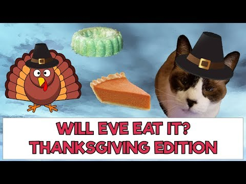 Funny videos - Funny Cat Eats Human Food Will Eve Eat Thanksgiving Foods