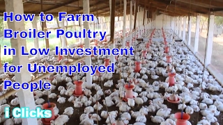 Nonton 2017 How To Starts Latest Broiler Poultry  Chicken  Simple Very Easy Method Marketing Bussiness 2017 Film Subtitle Indonesia Streaming Movie Download