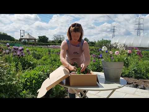 British Summer Flowers, Organic (20 stems)