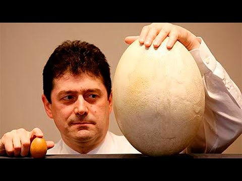 Что появилось раньше — курица или яйцо - DomaVideo.Ru