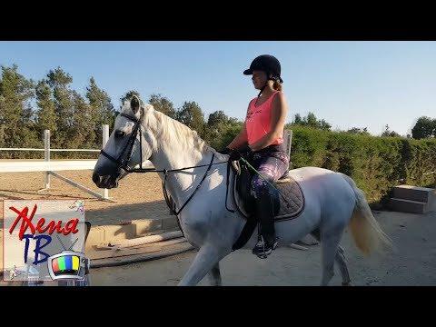 Детский Влог ЛОШАДИ Верховая езда Ютуб ВиДеО Канал для ДеТеЙ Видео про лошадей
