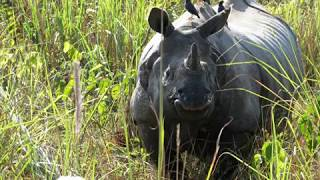 Dooars India  city photo : Jaldapara Rhino fight - Dooars - Beautiful West Bengal - Destination East - Incredible India