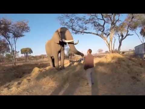 Zimbabwe Rhino and Elephant Conservation Video