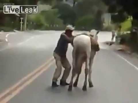 un ubriaco tenta di salire a cavallo