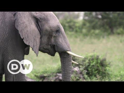 Südafrika: Bienen gegen Elefanten | DW Deutsch