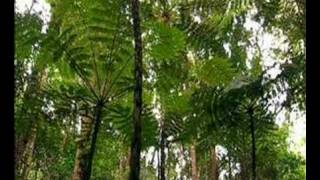 new celedonian biodiversity and wwf's efforts to protect it