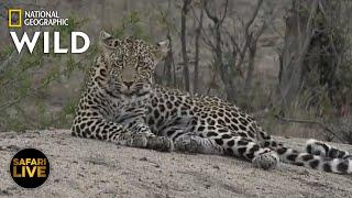 Safari Live - Day 266 | Nat Geo Wild by Nat Geo WILD
