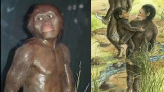 Lucy (Australopithecus) Reviewed in 9 Minutes (Public School Version)