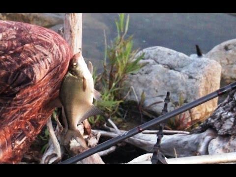 фидерная ловля леща на реке