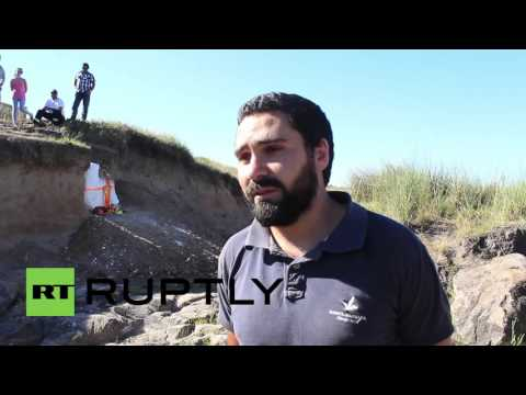 Uruguay: Vet discovers 10,000-year-old glyptodon fossil in Florida