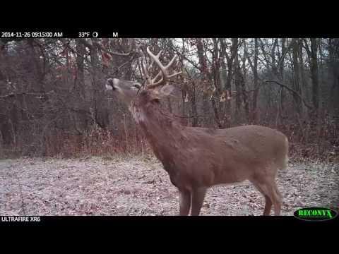 Hunt 'em Big