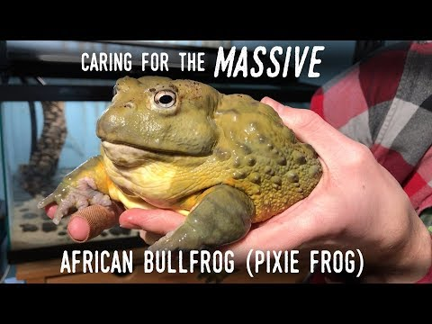 Setting Up a Truly GIANT Frog: Meet my New 7