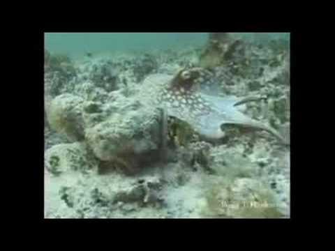 sembra un'alga ma guardate attentamente... incredibile!