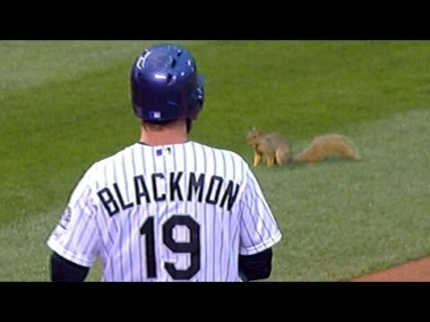 Field - 4/19/14: A squirrel finds its way onto the field, stopping play multiple times between the Phillies and the Rockies Check out http://m.mlb.com/video for our ...