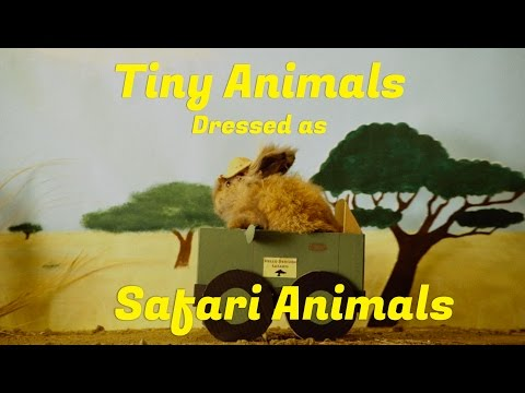 Tiny Animals Dressed as Safari Animals