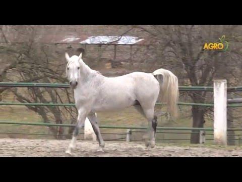 Конете на България - епизод I