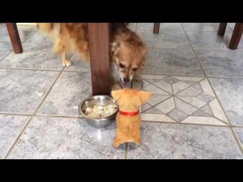 Lelukoira vs oikea koira – Taistelu ruokakipolla