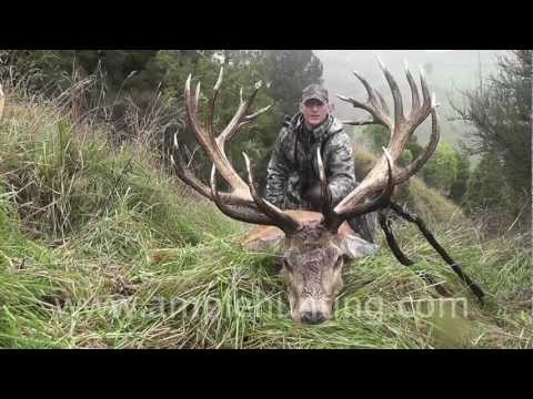 Hunting New Zealand - Ample Hunting highlights
