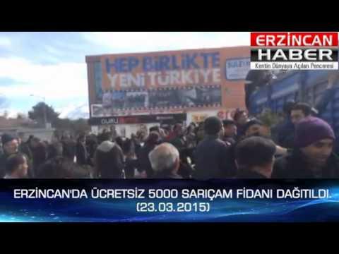 Erzincan'da 5000 Sarıçam Fidanı Dağıtıldı.