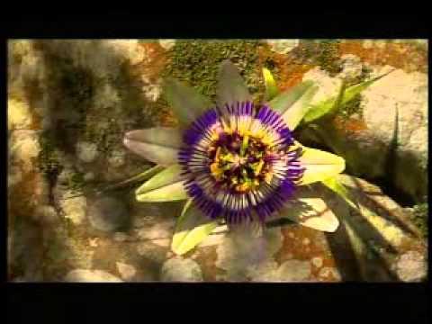VARILUX progresszív szemüveg: Élményutazás videó