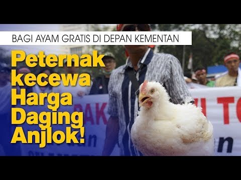 Bagi Ayam Gratis Di Depan Kementan, Peternak kecewa Harga Daging Anjlok!