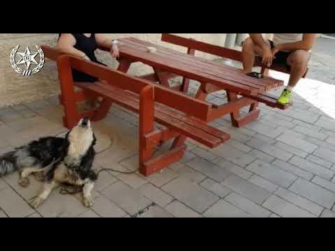 הכלב שהלך לאיבוד זוהה בזכות השיר משמש