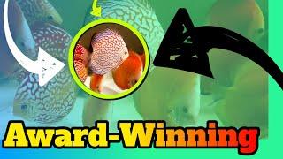 Award-Winning Discus Farm Tricks REVEALED [Tour] by Aquarium Co-Op
