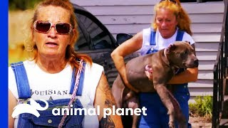 Injured And Terrified Dog Opens Up To His Rescuers | Pit Bulls & Parolees by Animal Planet
