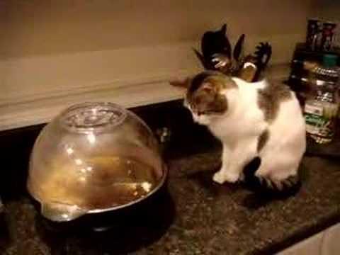 Кот и попкорн