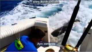 Bir Deniz Aslanı'nın işe alım hikayesi