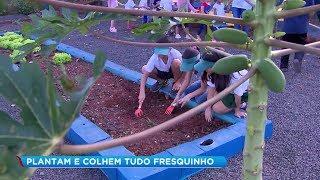 Crianças aprendem sistema de compostagem e como cultivar hortaliças