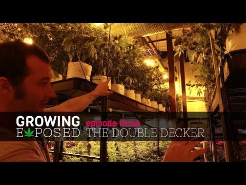 Growing Exposed Season 1 Episode 3 - Double Decked Growing