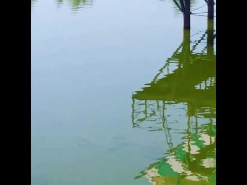 частные пруды для рыбалки в бишкеке