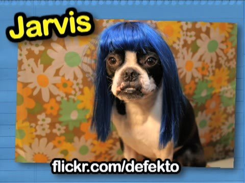 Cats and dogs with wigs