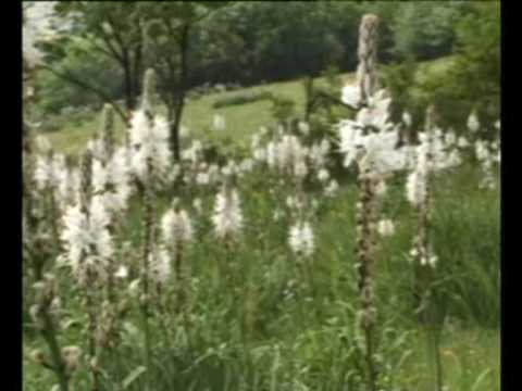 Parco del Monte Cucco flora e la fauna | Parco Monte Cucco