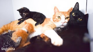 Video LIVE: Feral caternity ward and kitten nursery - TinyKittens.com MP3, 3GP, MP4, WEBM, AVI, FLV Mei 2018