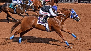 On the new edition of the Weekend WrapUp:Bodacious Eagle & BH Lisas Boy keep their 2017 win streaks alive...TQHA Sires' Cup Futurity & Derby and Firecracker Futurity & Derby recaps + much more!  Weekend Wrap, hosted by Jim Byers, is sponsored by the Oklahoma Qtr Horse Assoc. & American Qtr Horse Assoc.  (Thumbnail image by Gay Harris at Ruidoso Downs)