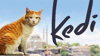 Nonton Kedi   Full Length Documentary Film Subtitle Indonesia Streaming Movie Download