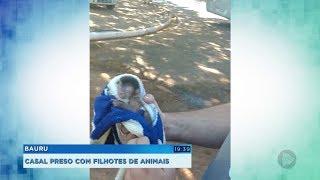 Casal é preso transportando filhotes de animais silvestres em Bauru