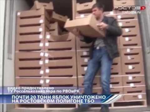 Почти 20 тонн яблок уничтожено на Ростовском полигоне ТБО