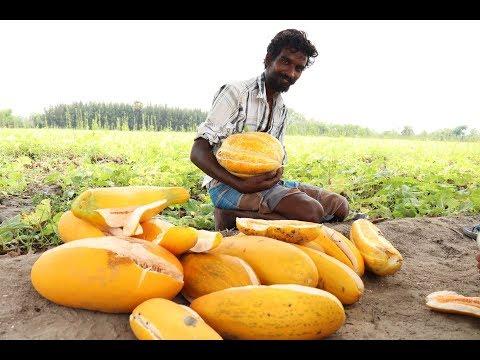 Cucumber Fruit Juice prepared by my friend bharathi in my village | village food taste