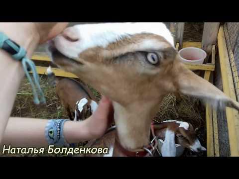 Обзор хозяйства Елены. Челябинск. (видео)