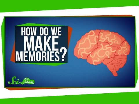 How Do You Make Memories? You'll Be Surprised How After You Watch This (VIDEO)