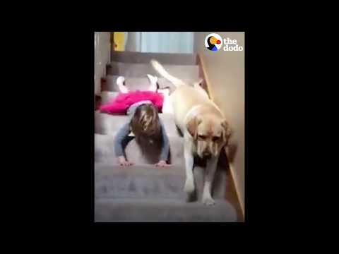 Girl Dog Slide Down Stairs Together The Dodo