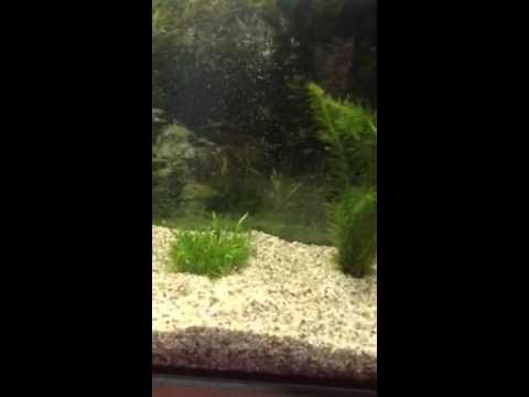 Wasserpflanzendünger für Anfänger